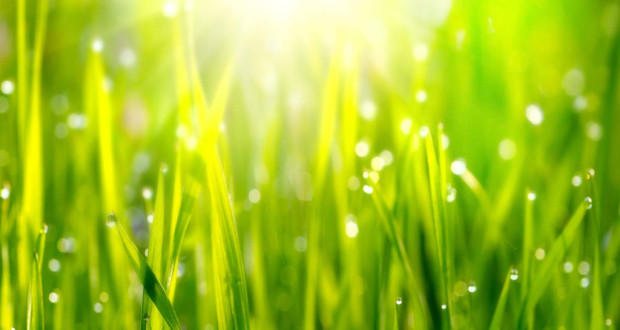 газон краткий курс по посеву газона
