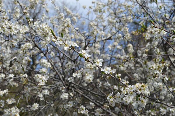 кустарники Ростовской области