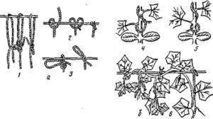 Способы подвязывания огурцов к шпалере