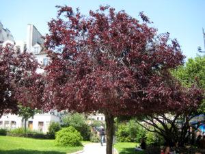 деревья с красной листвой
