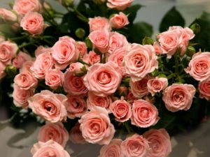 роза и знаки зодиака
