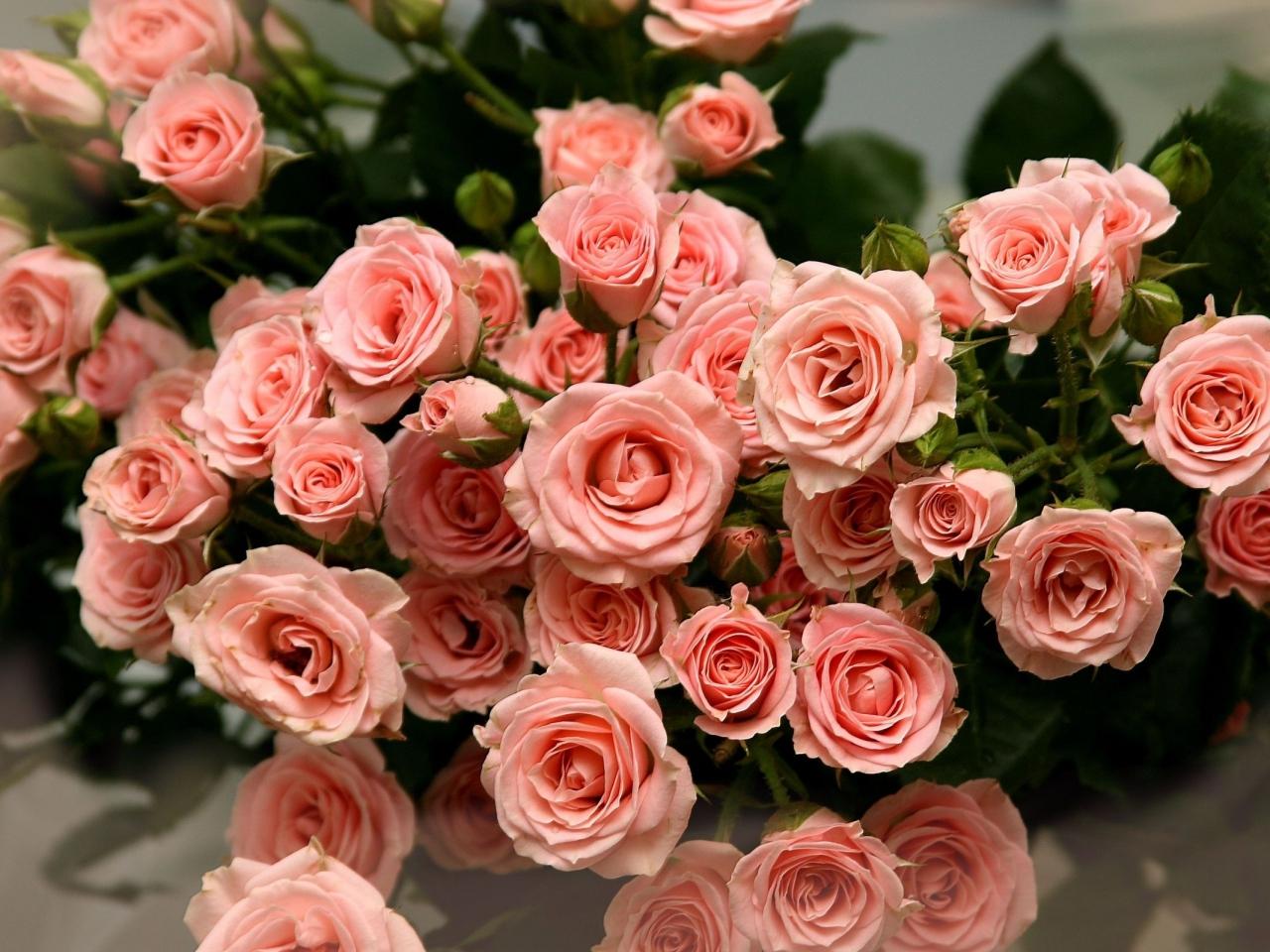 Фото розы высокого разрешения