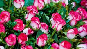 какие розы выбрать для букета по знакам зодиака