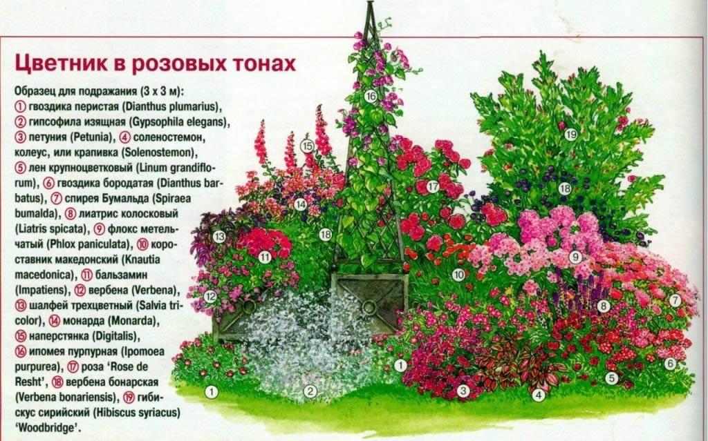 Shema-oformlenija-klumby-v-rozovyh-tonah