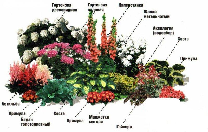 cvetnik_nepreryvnogo_cveteniya_shema3