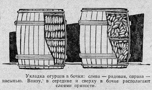 засолка огурцов
