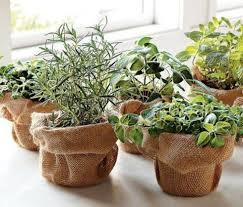какие травы можно выращивать на подоконнике