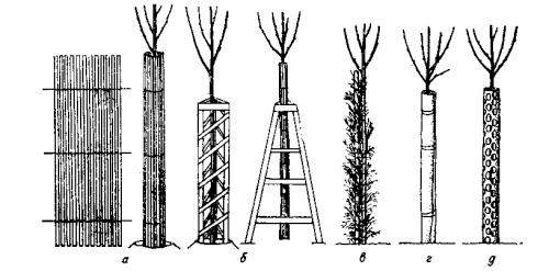 защита дерева от зайцев