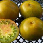 экзотические сорта тоиатов
