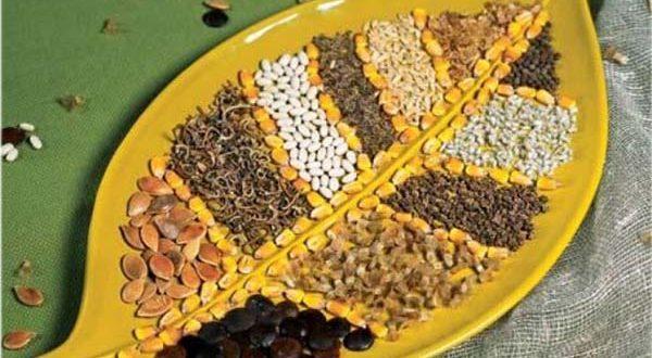 как собрать семена
